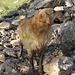 Es geht doch nichts über eine Fangopackung - Hund weiß schließlich was gesund ist :-)