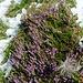 Im Seetal - Erika und Anemone haben den Schnee gut überstanden