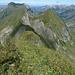 Wildwuchs am Gipfelkreuz des Fläschenspitz