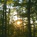 Abendstimmung im Wald unterhalb vom Adler-Gipfel.