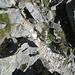 der kurze Kamin unweit des Gipfels: hier der Blick von oben