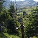 Der Weg führt oberhalb um ein Wildschongebiet herum.
