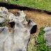 Auch auf dem Weg zur Schwarzwasserhütte kann man schon die interessanten Felsformationen entdecken, die auf dem Gottesacker in ihrer wahren Pracht zu sehen sind.