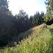Blumen am Wegesrand am Altendorfer Rundweg (Teil des Malerwegs, 2007 zum schönsten Wanderweg Deutschlands gewählt)