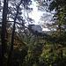 der Falkenstein blitzt durch den Wald