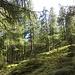 Schöne Lärchenwälder im Val Malvaglia
