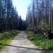 nun auf breiten Forstwegen durch von Borkenkäfern zerstörten Wäldern