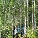 Camping im Birkenwald