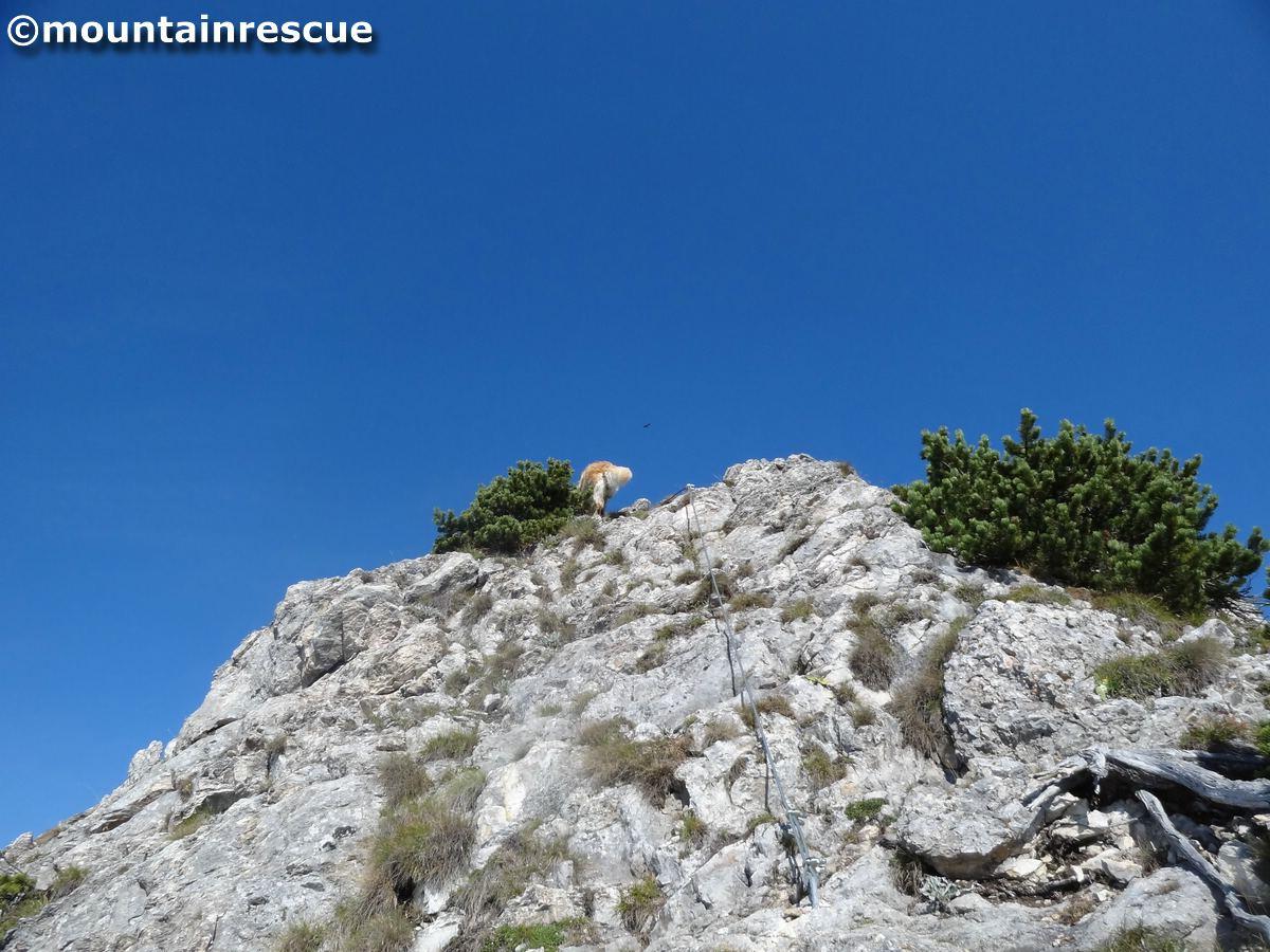 Das ist meistens das Bild das sich anderen Bergsteigern bietet: Hund in flottem Tempo voran, während das Herrl  hinten nach schnauft ;-)
