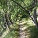 friedlicher Pfad durch Nadelwald