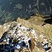 Kurz vor dem Gipfel. Tiefblick den Grat hinunter zum Rot Bristen und Bristensee.