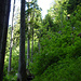 Beim Aufstieg durch den Wald