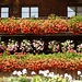 Blumenpracht in Riffenmatt