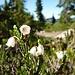 Blüemli am Wegrand, in allen Farben