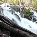 Im Aufstieg auf dem Horse Creek Trail - Am Wegrand fällt der Horse Creek über viele kleinere und größere Kaskaden bzw. Wasserfälle in Richtung Twin Lakes zu Tale.