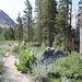 Im Aufstieg auf dem Horse Creek Trail - Dieser führt hier weiter geradeaus, der Cattle Creek Trail biegt links ab. Eine Holztafel weist den Weg.