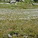 Herrliche Blumenwiese