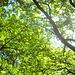 Start, noch in der Sonne, in Hannovers Stadtwald, der Eilenriede.