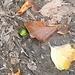Jetzt versteckt er sich unter den ersten herbstlichen Blättern...