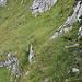 Das Geisswegli zum Greifen nahe, aber über diese Felsige Passage getraute ich mich nicht, sieht hier auch etwas harmloser aus