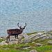 Was - der Laponia kommt schon wieder vorbei....