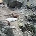 Wenige Meter unterhalb der Abseilstelle friedliches Steinböckeln