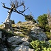 Das letzte Stück vor der Gipfelplatte zum Burgberger Hörnle.