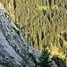 Blick in die Südkante des Burgberger Hörnle beim Abstieg.