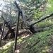 verfallende Lawinenverbauungen (absichtlich mit Holz eingerichtet: bis der Jungwald Schutzfunktion erreicht hat - verfällt das Holz der Verbauung)
