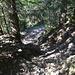 rund 30min abwärts durch den Wald; der Schatten ist willkommen, nützt aber den Knien nichts ;-)