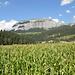 Maisfeld und der Flimser Stein