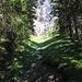 Il torrente che attraversa il bosco di Pinut, in alto la seconda parete da salire.