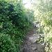 steiler Abstiegsweg vom Drachenberg II