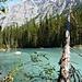 Robson River