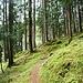 Super schöner Wanderweg im Wald