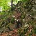Aufstieg aus dem Chaltbrunnental zum Littstelchöfpli