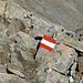 Willkommen Österreich? Nein, die rot-weiss-roten Wegmarkierungen.