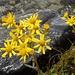 Blüemli am Seeufer