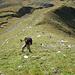 Steiler, aber gut gestufter Rasenhang, bei trockenen Verhältnissen gut zu begehen