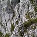Genau hinsehen - D. (in der Bildmitte) ist schon hinab an den Gipfelaufschwung gestiegen, und klettert nun durch zwei enge Felsspalten empor