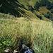 Viel steiles Gras am Leiterenstollen