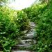 Endlose Steintreppen im Feucht-Biotop - der stotzige Weg wie er leibt und lebt.