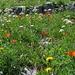 Herrliche Flora (die roten sind alles Feuerlilien!)