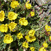 Blüemli bei der Tierberglihütte