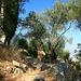 Isi beim Aufstieg zur Burg von Kassiopi