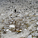 Lo sfiatato [u giorgio59m] sul sentiero per il passo