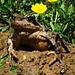 Der Froschkönig persönlich begrüsste uns