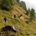 Sentiero verso il lago Retico, Pass Cristallina, sentiero degli Stambecchi, Cima di Garina