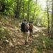 Schöner Abstieg im Kastanienwald