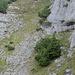 Die 2. Schlüsselstelle: von der rechten unteren Bildecke traversiert man zw. den Felsen und der Baumgruppe hindruch und quert anschliessend hinauf zur oberen linken Bildecke. Die roten Markierungen sind teilweise zu erkennen.